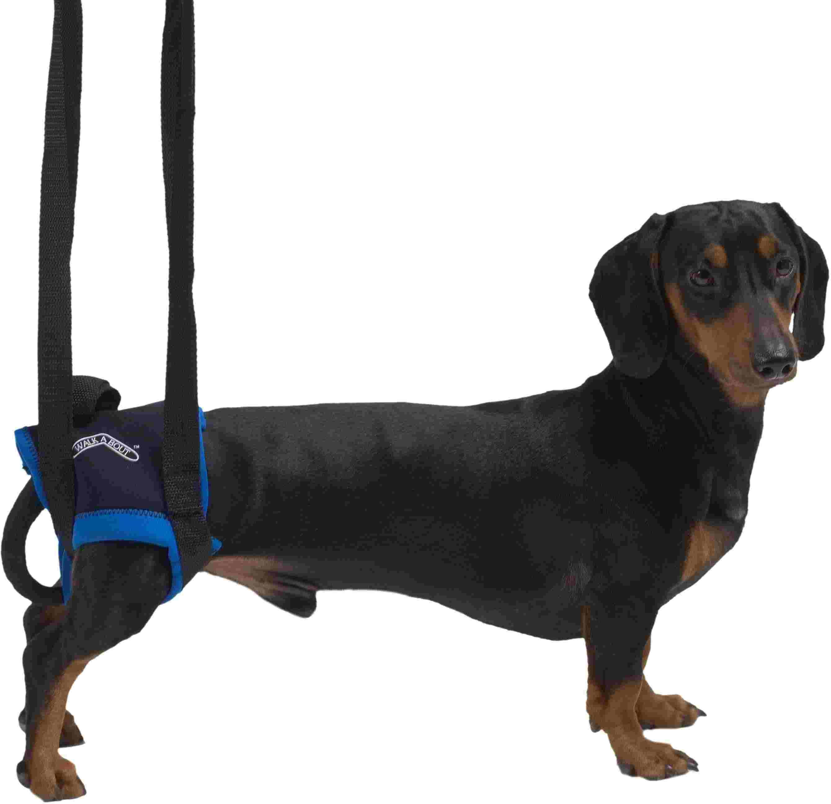 Kruuse вожжи Walkabout harness на задние конечности M