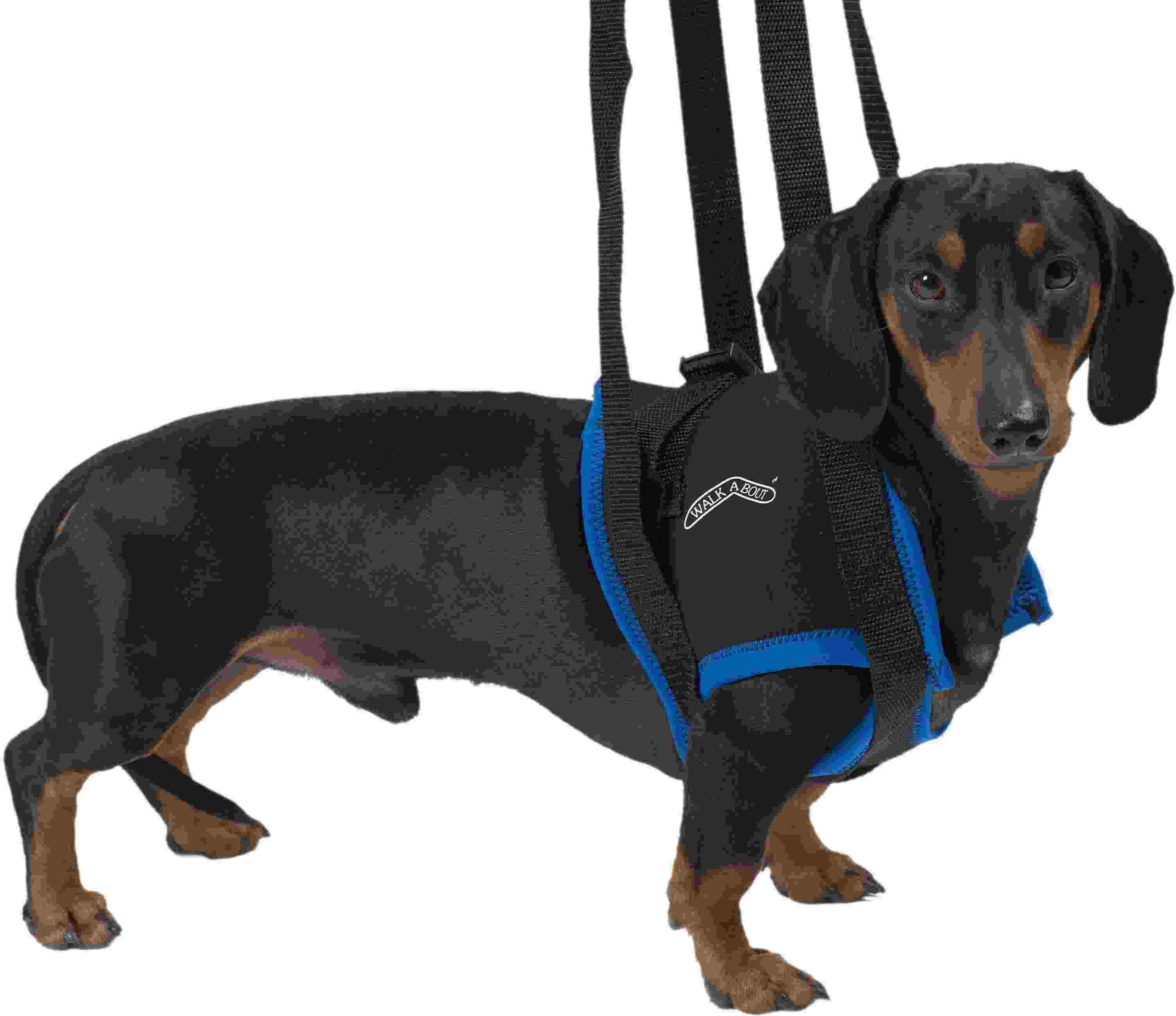 Kruuse вожжи Walkabout harness на передние конечности XL, 161569