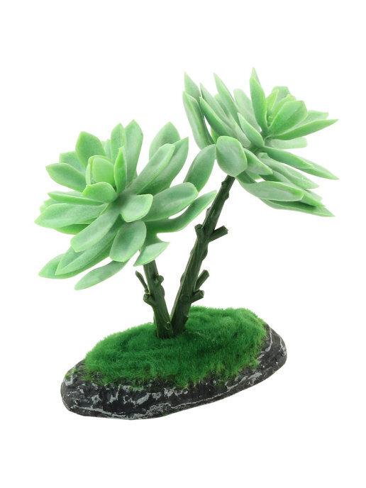 REP15010 Террариумное растение Граптоверия 15см