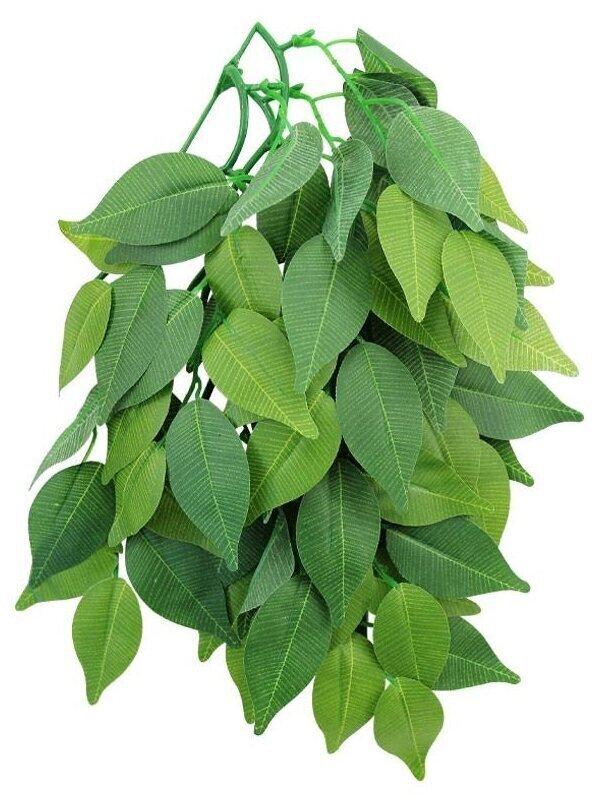 TP002-20 Растение для террариума Фикус 50см