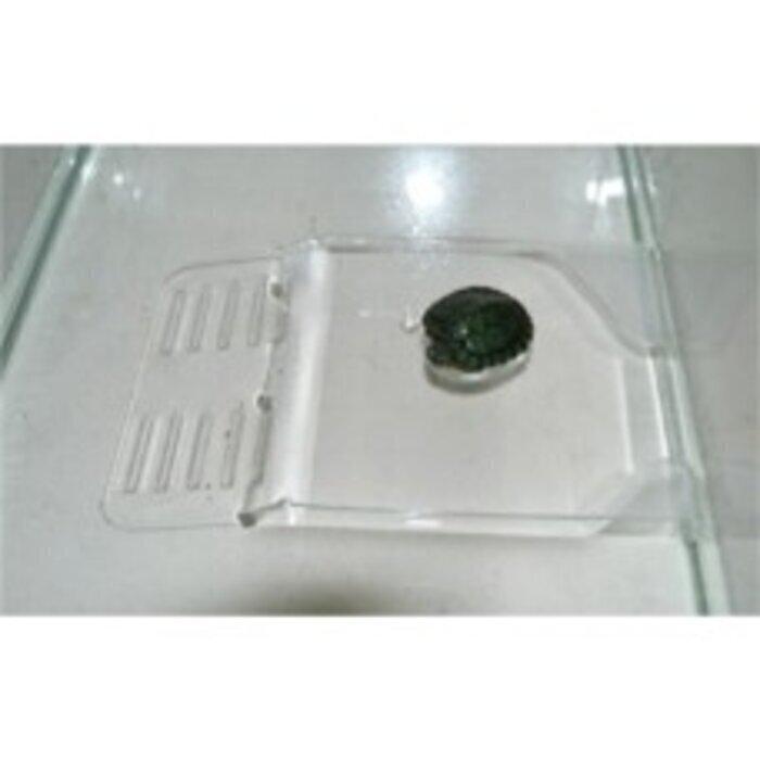 Пл-1 Плотик для черепашек (установка на дно аквариума  малый)  h 3*12*19 см